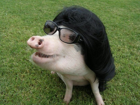 Pig In A Wig 68