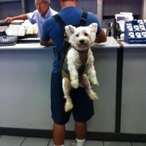Meanwhile at the post office
